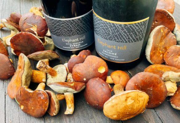 Elephant Hill Weine zu Pilzgerichten